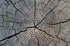 打结木头 免版税图库摄影