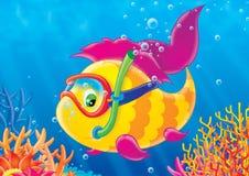 珊瑚鱼礁石 库存图片