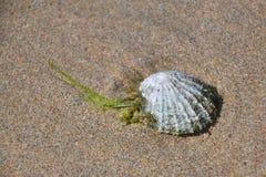 海滩沙子壳 免版税库存图片