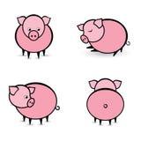 抽象不同的四个猪位置 免版税图库摄影