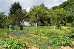 农村的庭院 免版税库存照片