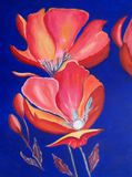 红色明亮的油画的鸦片 免版税库存照片