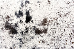 ζωική άριστη γούνα Στοκ φωτογραφίες με δικαίωμα ελεύθερης χρήσης