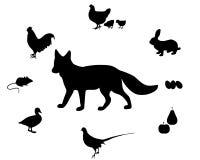 饮食狐狸 免版税库存图片