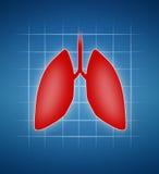 肺 免版税库存照片
