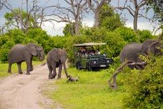 博茨瓦纳大象徒步旅行队 免版税库存照片