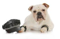 坚韧的狗 免版税库存图片