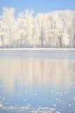 报道的霜结构树冬天 免版税库存照片