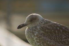 鸟 免版税库存照片