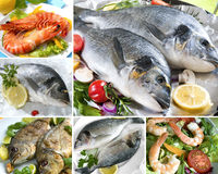 продукты моря коллажа Стоковое Изображение