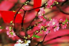 персик цветения Стоковая Фотография RF