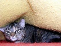 不快乐的猫 免版税图库摄影