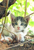γατάκι λίγα Στοκ Φωτογραφίες