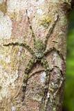 巨型绿色蜘蛛越南语 免版税图库摄影