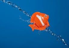 鱼浇灌 图库摄影