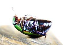 停止的甲虫 库存图片