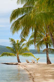 пальмы острова тропические Стоковые Фото