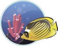 鱼 免版税库存图片
