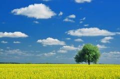横向春天 库存图片