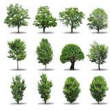 δέντρο συλλογής Στοκ Εικόνα