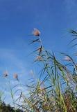 蓝色横向用茅草盖天空高热带 免版税图库摄影