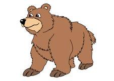 коричневый цвет медведя Стоковая Фотография RF