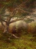 φθινοπωρινό λιβάδι Στοκ Εικόνες