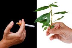 抽烟的替代健康生活方式 免版税图库摄影