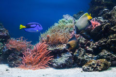 水下珊瑚鱼生活的礁石 库存图片