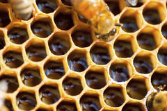 蜂对本质 免版税库存图片