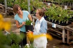 αγορές φυτών σπιτιών Στοκ φωτογραφία με δικαίωμα ελεύθερης χρήσης