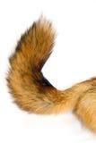 狐狸红色尾标 免版税图库摄影
