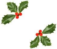 圣诞节设计要素霍莉 免版税库存图片
