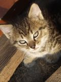 штилевой кот Стоковое Изображение