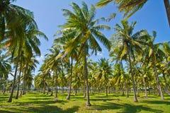椰子种植园 免版税库存照片
