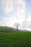蓝色草绿色天空结构树 免版税库存照片