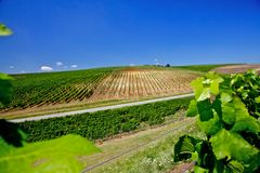 виноградник Румынии Стоковое Изображение