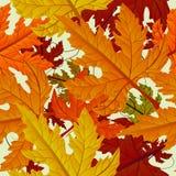 秋天背景留下槭树无缝的瓦片 免版税库存照片