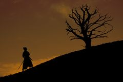 δέντρο Σαμουράι Στοκ φωτογραφία με δικαίωμα ελεύθερης χρήσης