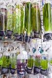 淡水植物出售 免版税库存照片