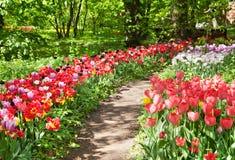 植物园路径 免版税库存图片