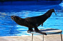 熊狮子海运立场 免版税库存照片