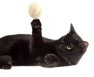 μαύρη γάτα χαριτωμένη Στοκ Εικόνες