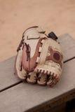 棒球手套露指手套 免版税库存图片