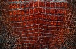 крокодиловая кожа Стоковое Изображение
