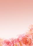 образуйте розовые розы Стоковые Фото
