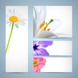 πρότυπο λουλουδιών φυλλάδιων Στοκ Εικόνες