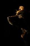 καφετί σκυλί Στοκ φωτογραφία με δικαίωμα ελεύθερης χρήσης