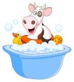 浴母牛采取 免版税图库摄影