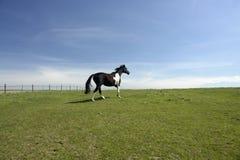 开放美丽的域的马 免版税图库摄影